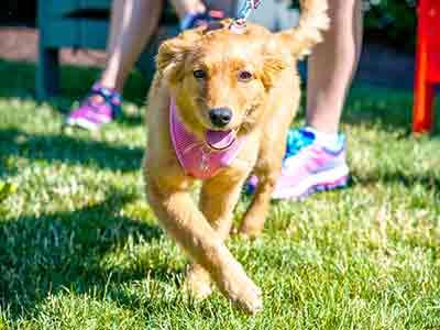 Panera Pup Walk