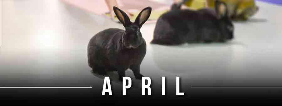Social Animal Calendar April