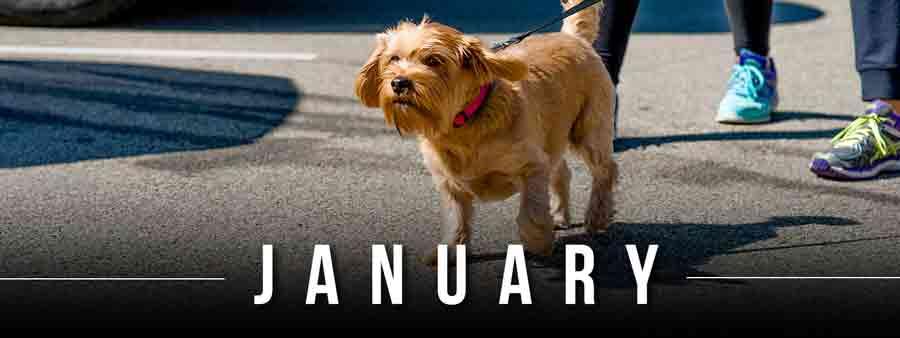 Social Animal Calendar
