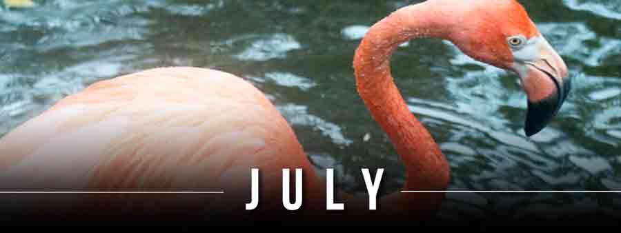Social Animal Calendar July