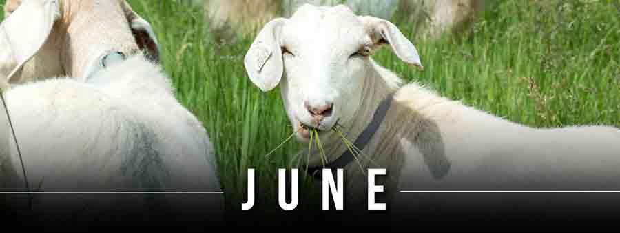 Social Animal Calendar June