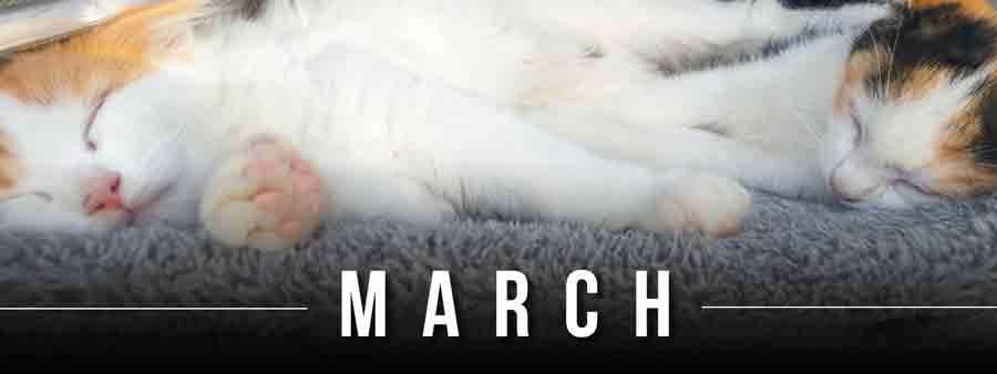Social Animal Calendar March