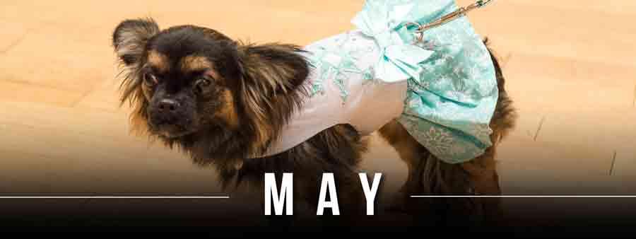 Social Animal Calendar May