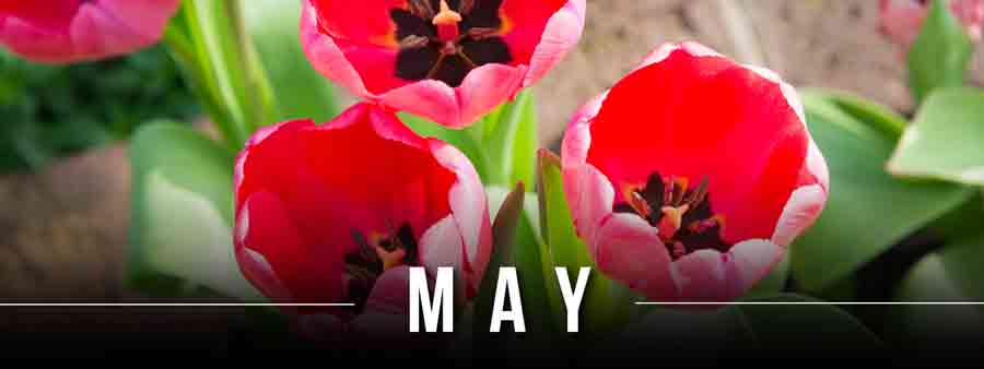 Social Calendar of Special Days May