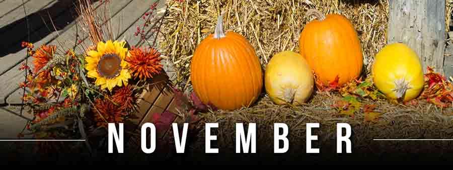 Social Festivals Calendar - November