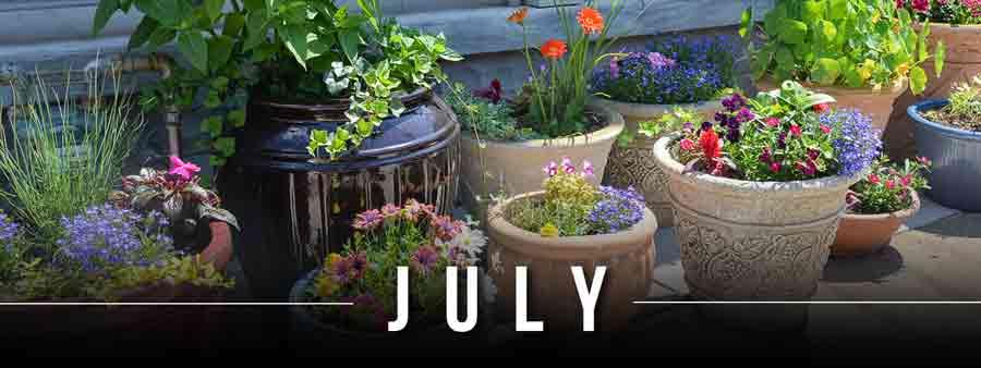 Social Garden Calendar - July