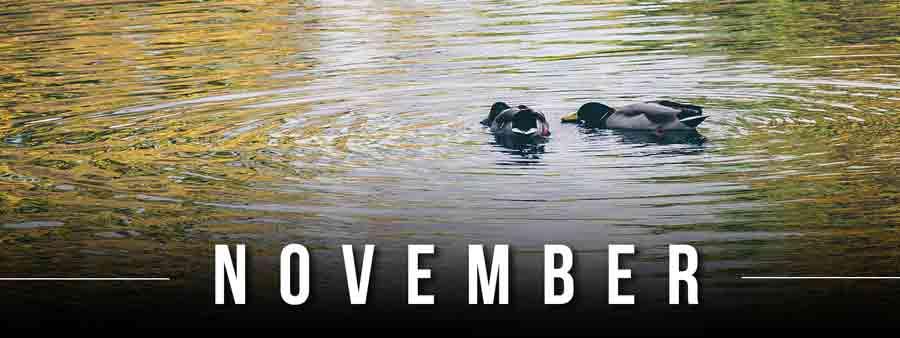 Social Psychology Calendar - November