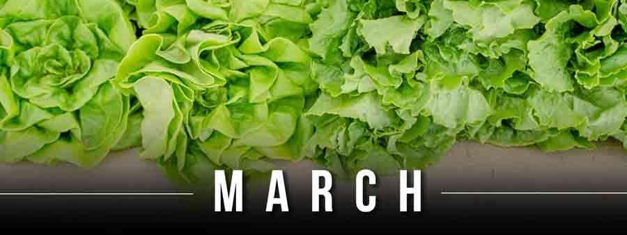 Social Wellness & Awareness Calendar - March
