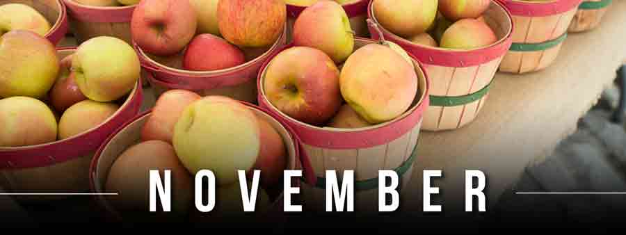 Social Wellness & Awareness Calendar - November